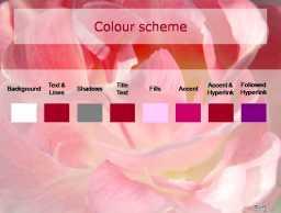 红花浪漫-植物PPT模板